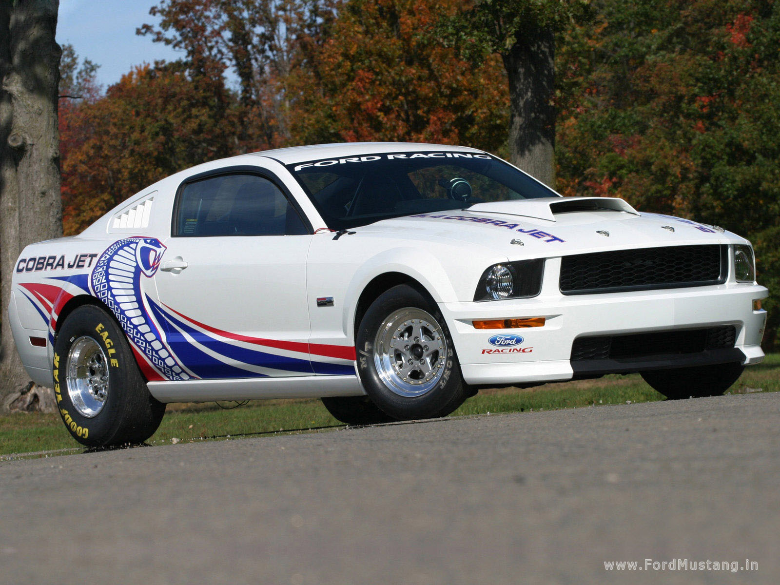 ford mustang cobra jet-pic. 3